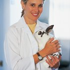 What Is the Difference Between a PhD in Veterinary Science & a DVM?