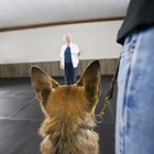 Training to Become a Dog Trainer for the Disabled