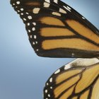 Butterfly Migration Pattern Activities for 2nd Grade