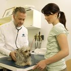 Colleges for Getting a Bachelor's Degree in Veterinary Sciences Close to Ohio