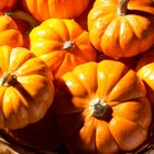 Easy Fall Festival Foods for Kids
