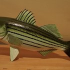 The Best Ways to Catch Stripers