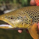 Places to Trout Fish in Southern California