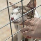Pros & Cons of Animal Shelters