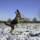 The Best Dog Breeds for Walking