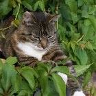 What Gravel Keeps Cats Out of Flower Beds & Bushes?