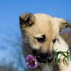 How to Keep Your Dog from Eating Your Flowers