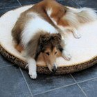 The Best Bedding for Dogs in Cold Weather