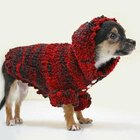 How to Get Your Dog to Wear a Coat or Sweater