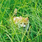 What Effect Does Grass Have on Cats & Dogs?