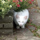 Outdoor Plants Harmful to Cats & Dogs