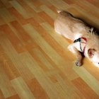 The Best Hardwood Floor for Dogs