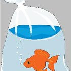How to Uncloud a Goldfish Tank
