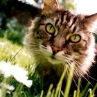 Natural Cat Repellent Tips