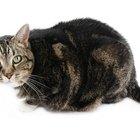 cat pain relief aspirin