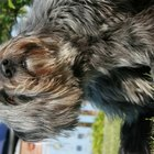About Patches of Hair Loss in Dogs