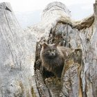 How to Make a Rustic Cat Tree
