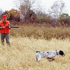 English Pointer Behavior When Picking Up Scents