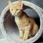 The Best Cat Tree Furniture