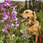 Flowers Poisonous To Dogs
