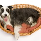What Material Is Good to Fill a Dog Bed?