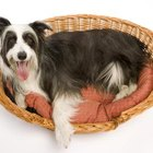 Make a doggy bed from an old bedspread.