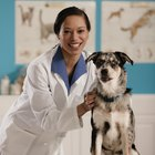 Objectives for Veterinarian Internships