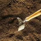 Add well-aged compost or manure to improve the nutrient levels and texture of extremely sandy soil.