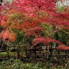 Japanese maples are small trees that grow well in the shade.