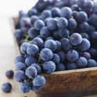 Blueberries are a good source of fiber and vitamin C.