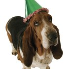 Party Hats for Dogs