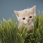 Organic Plants for Kittens & Cats