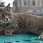 The Best Ways to Tame a Stray Cat