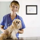 Veterinary Technician & Dental Certifications