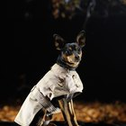 Sewing Patterns to Make Dog Coats