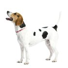 Pros & Cons of Barking Devices for Dogs