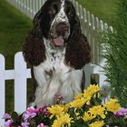 How to Keep a Dog From Destroying Your Outside Flowers