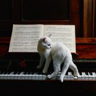 What Kind of Music Do Cats Prefer?