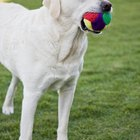 Teaching Dogs to Chase Balls