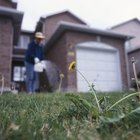 Weeds create seeds which can spread throughout your yard.