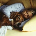 Foods for Calming Dogs