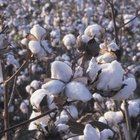 Cotton fields produce a large percentage of gin mill waste.