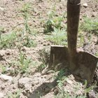 Soil should be broken up to a depth three times the height of the tree's original container.