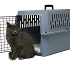 What Is the Best Method of Pet Transportation for Cats?