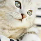 What Are the Causes of a Third Eyelid in a Kitten?
