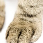 What Are the Functions of the Hair Between a Cat's Claws?