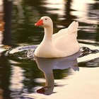 What to Know About Aflac Before an Interview