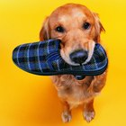 How to Train Your Dog Not to Chew Shoes