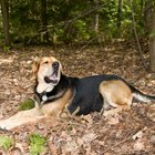 Is Hemlock Bark Bad for Dogs?