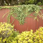 Plants can soften the hard lines of fencing.